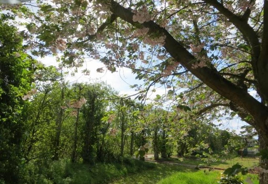 Orchard at Brogdale