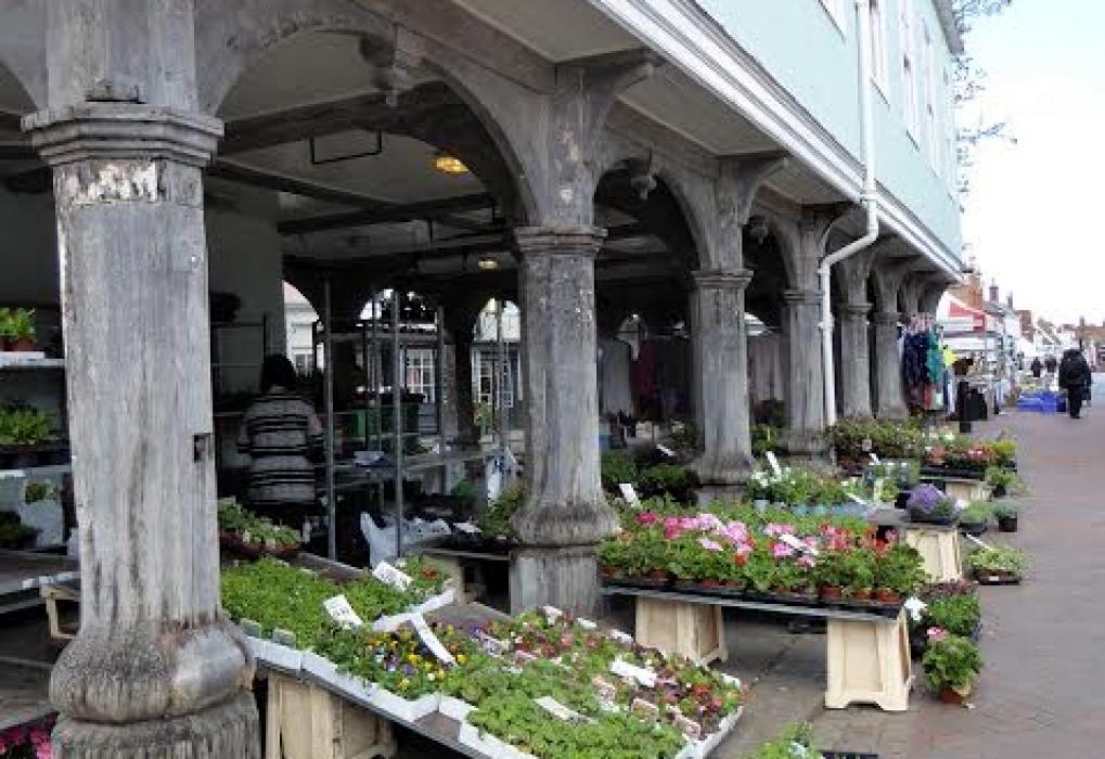 Plants at Faversham Guildhall