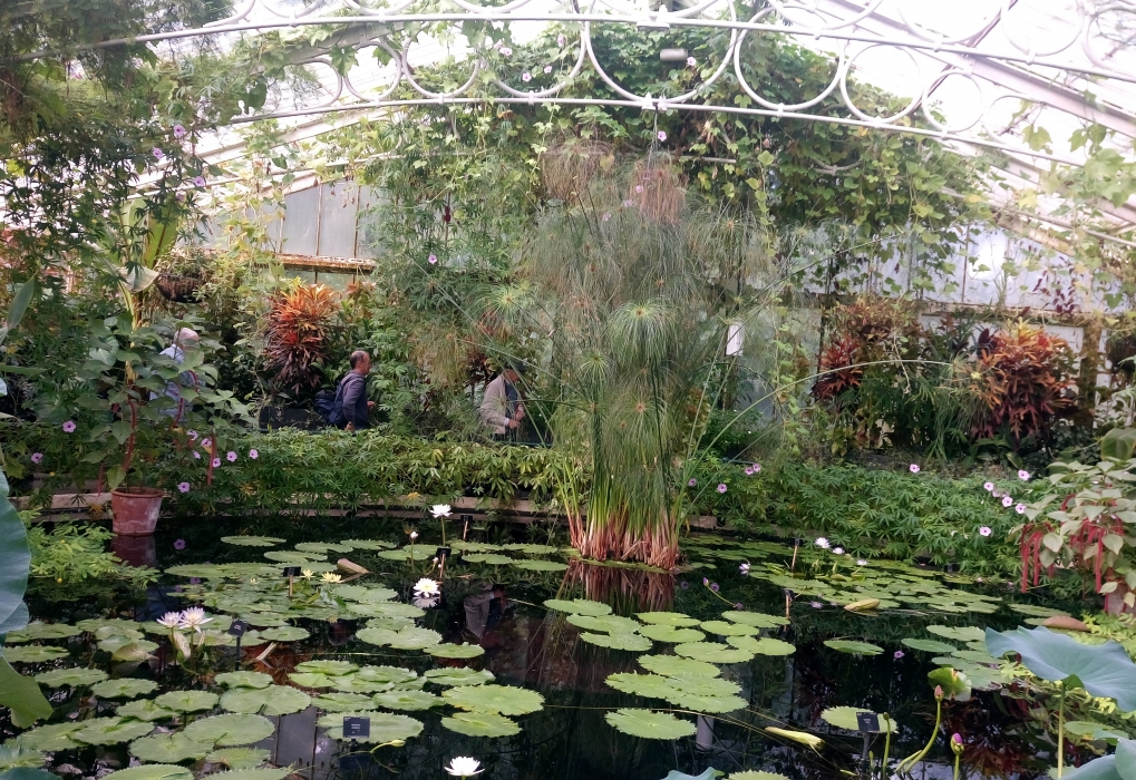 Tropical pond at Kew  Wow!