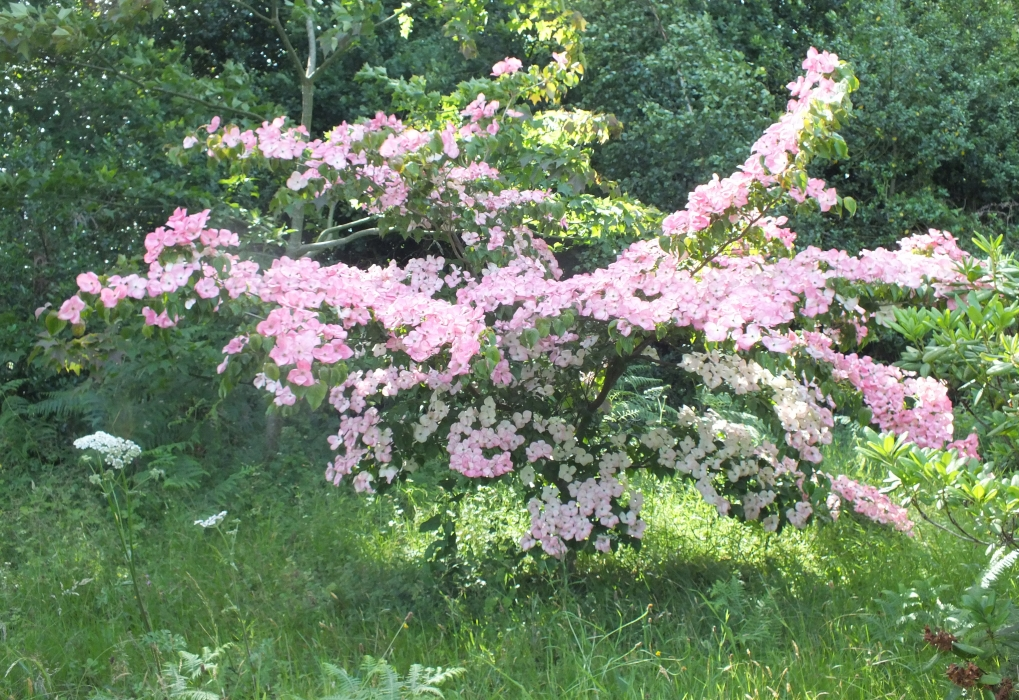 Andy McIndoe's garden Romsey 2019