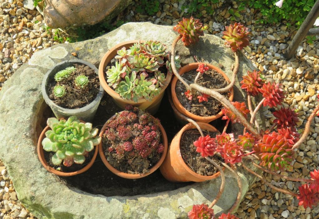 Susan P arid plant pots