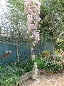 Susan P Spring Blossom