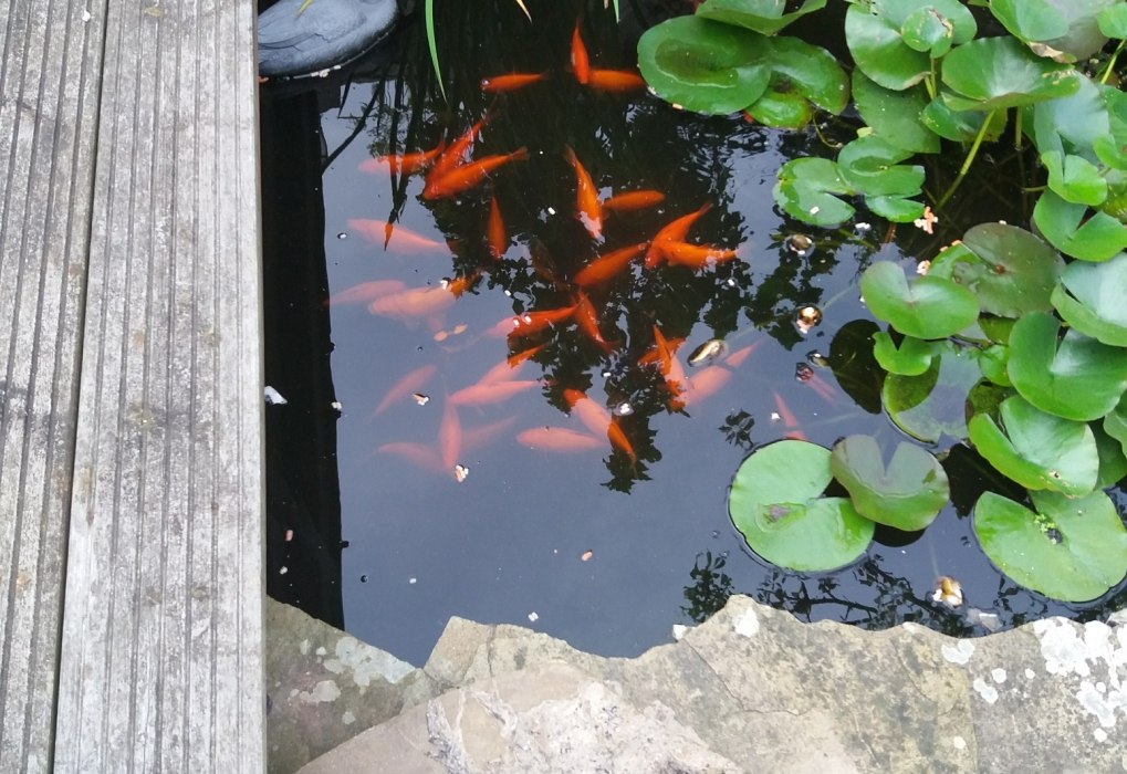Tony & Marilyn's garden pond