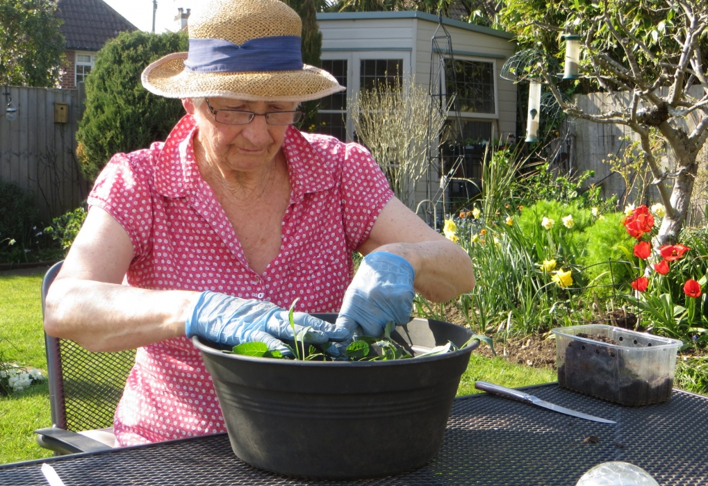 Marion K 'Pricking out some Kale seedlings'
