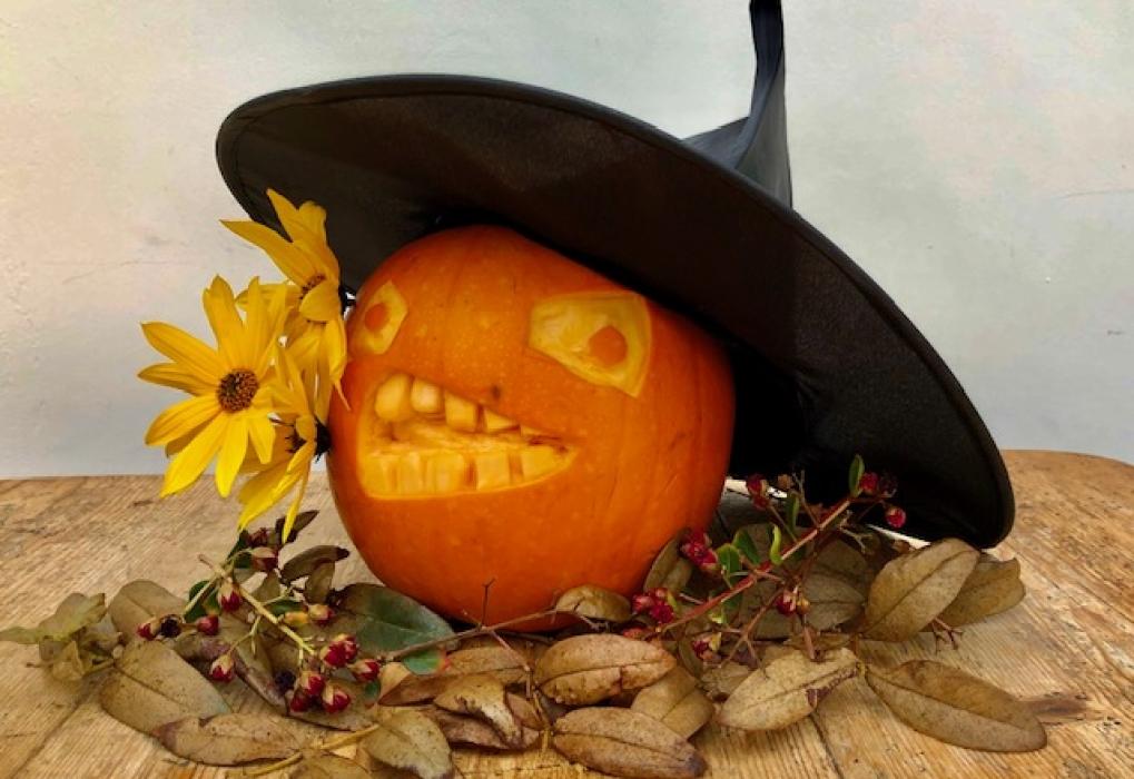 Jacky_Holt_pumpkin_(Prunella)