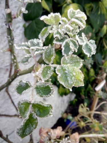 Frost Miranda H