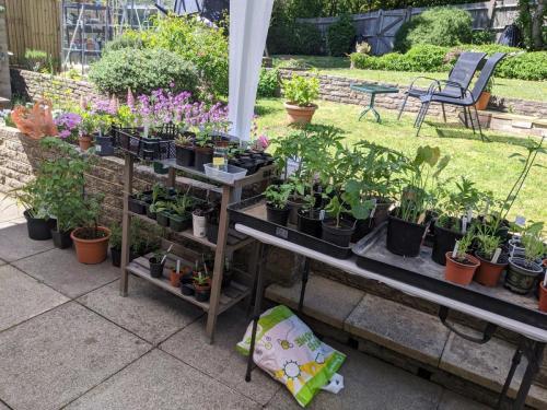 Jenny's plant sale