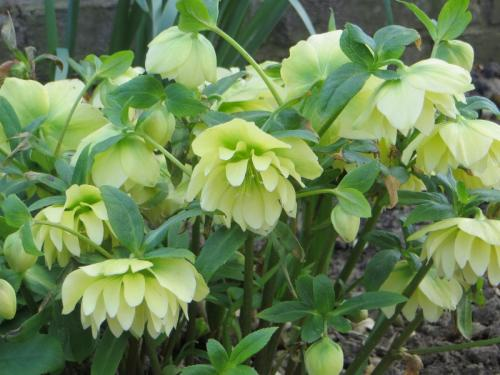 Marion K Mellow Yellow