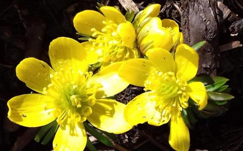 Maria G Mellow Yellow