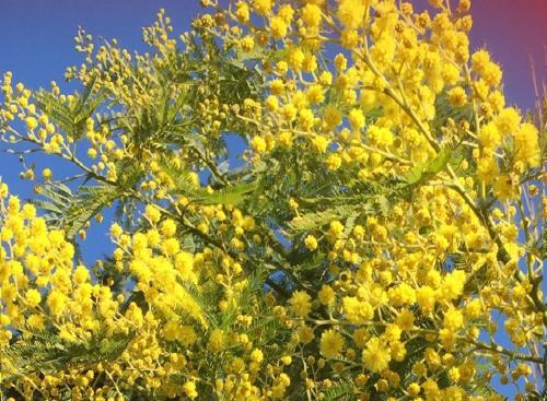 Jo A Mellow Yellow