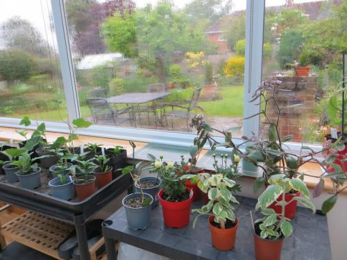 Marion's May plant sale