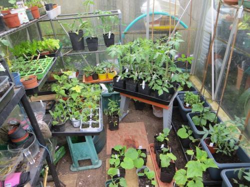 Marion K's greenhouse plant sale